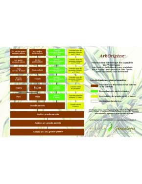 Tableau synthétique des filiations pouvant figurer sur l'Arborigène