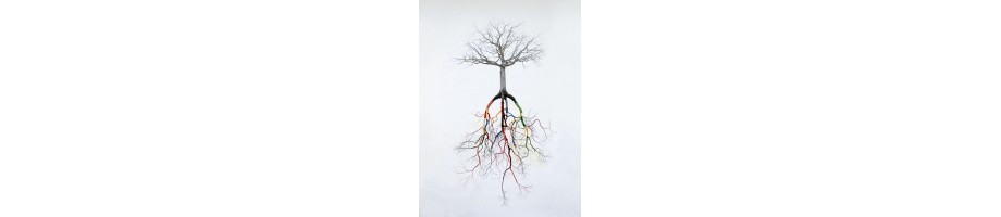 Asc. & desc. trees
