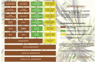 Présentation synthétique des capacités de l'ArbOrigène